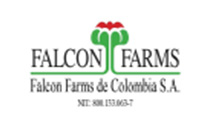 FALCON FARMS COLOMBIA - Colombia